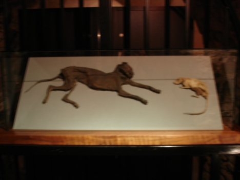 Mummified Animals!